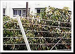 Razor Wire Fencing1